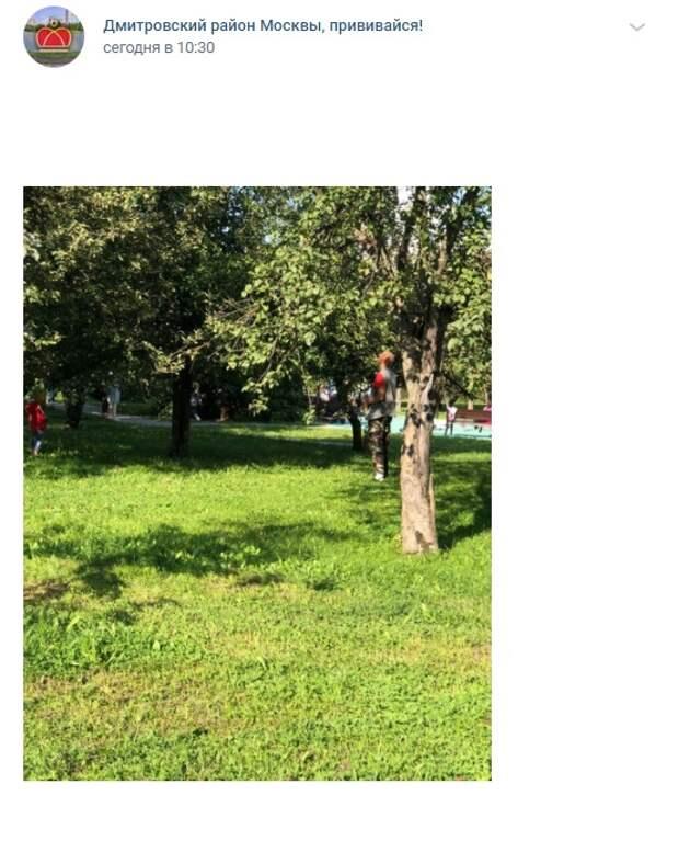 Фото дня: сезон охоты на яблоки на Ангарской