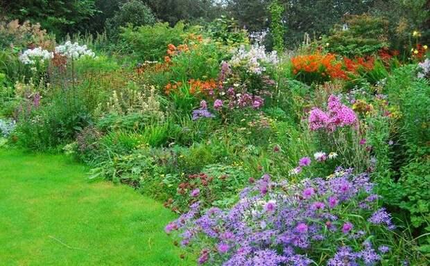 Цветущие лекарственные растения в природе
