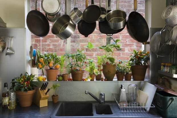 Какие виды комнатных растений подойдут для кухни