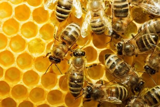 подкормка пчел