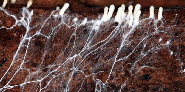 Главные биологические факторы, определяющие плодородие почвы