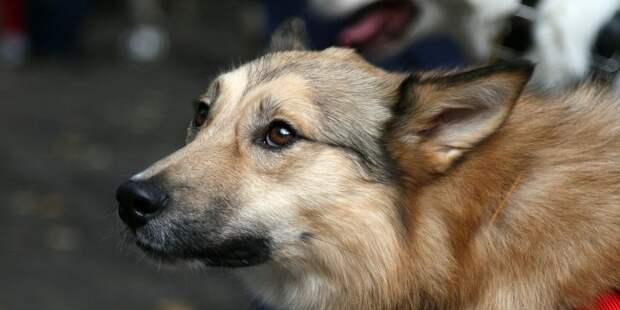 В приюте для собак «Искра» пройдет акция «Поделись с другом»