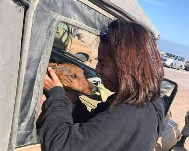 В Чили клетку с таксой выронили из самолета и собака 6 дней выживала в пустыне