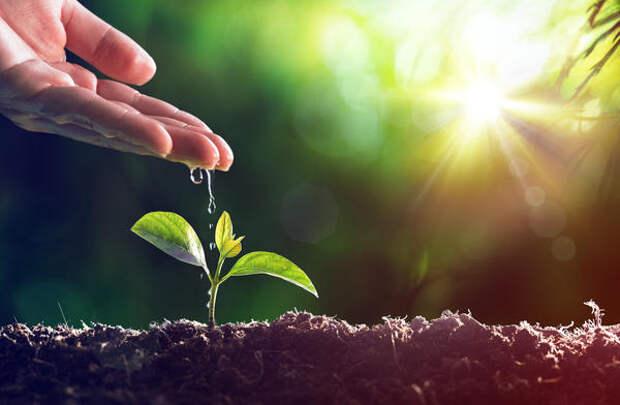HB-101 действительно активизирует энергию роста растений