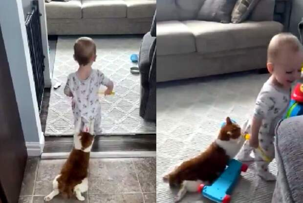 «Стой, говорю»: кот вцепился в ребенка и развеселил его