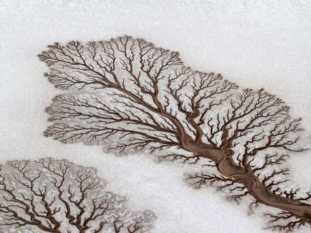 25 ошеломляющих оптических иллюзий, созданных природой природа, иллюзии, обман зрения