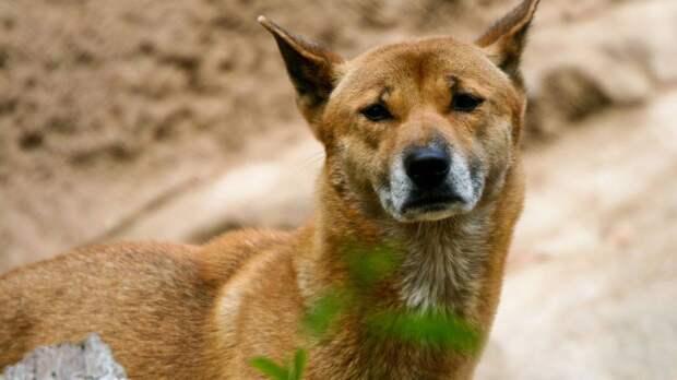 Жители Севастополя спасли от голодной смерти упавшую в бетонную трубу собаку