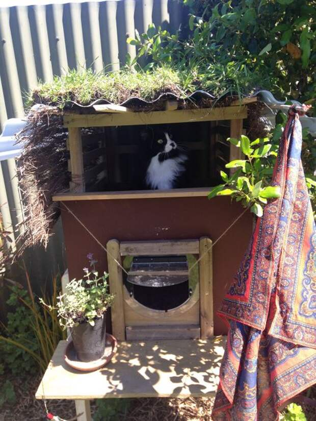 Владелица кошки построила для своей питомицы дом под открытым небом