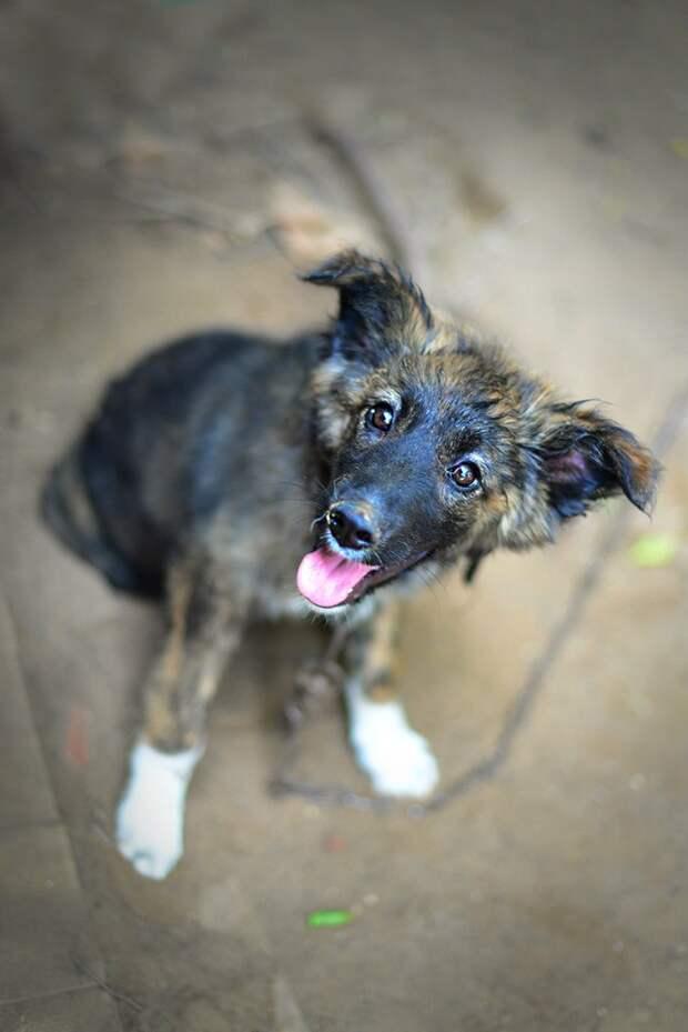 Милейшему щенку пришлось многое перенести за год жизни в приюте собака, тигровый, щенок
