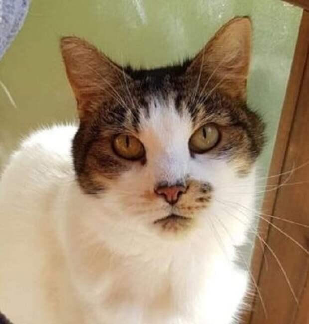 Старенький исхудавший кот оказался на улице, но его удалось преобразить благодаря волшебным рукам неравнодушных людей