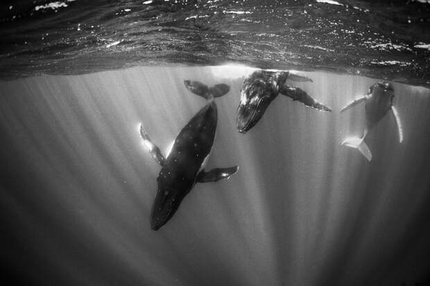 Чешские ученые использовали песни китов для сканирования океанского дна