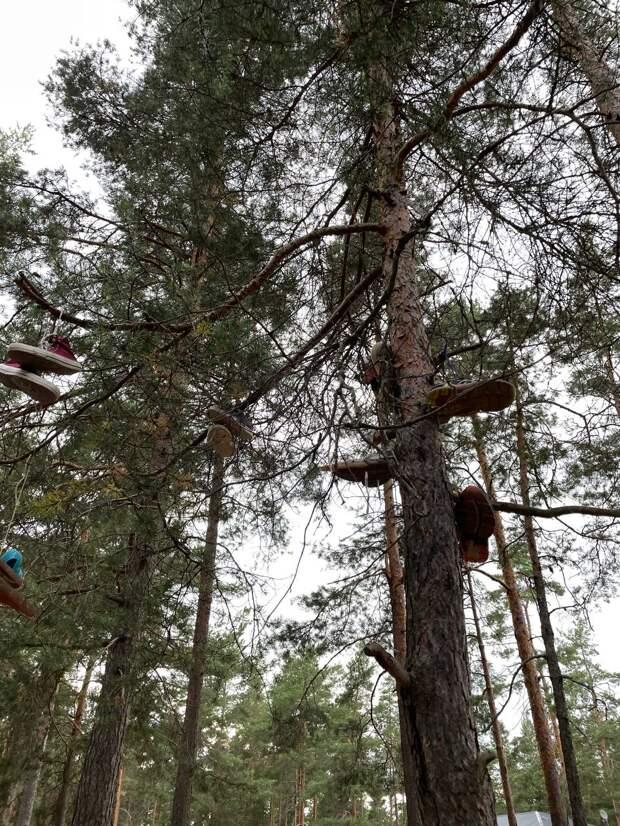 У Суходольского озера открылась Лосевская биеннале с инсталляциями из веток, коробок и кроссовок. Это работы подростков на тему пустоты и смерти