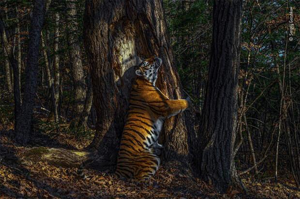 Лучшие фотографии дикой природы 2020 (III)