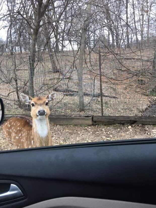 Эти 11 фото животных настолько неудачные, что смешно