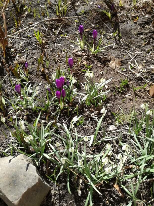Сад за март и апрель.