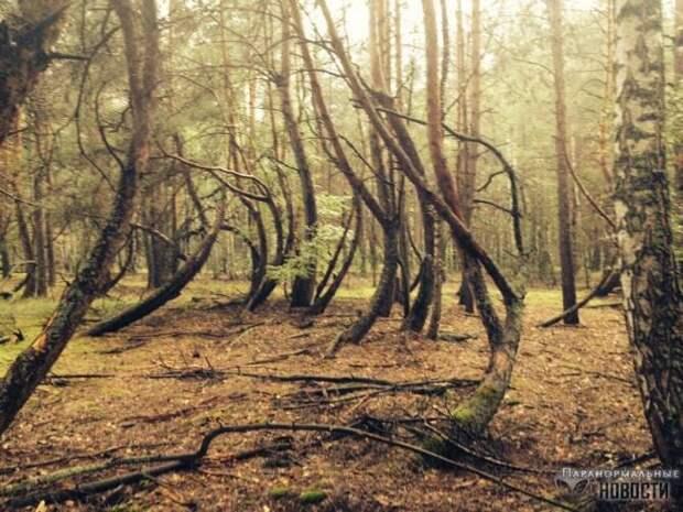 Космопоиск изучает аномальный лес в Рязанской области