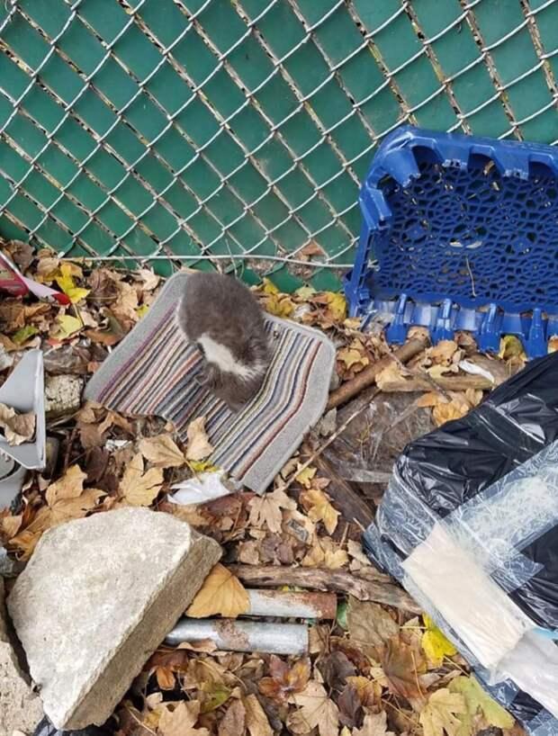 котенок среди мусора