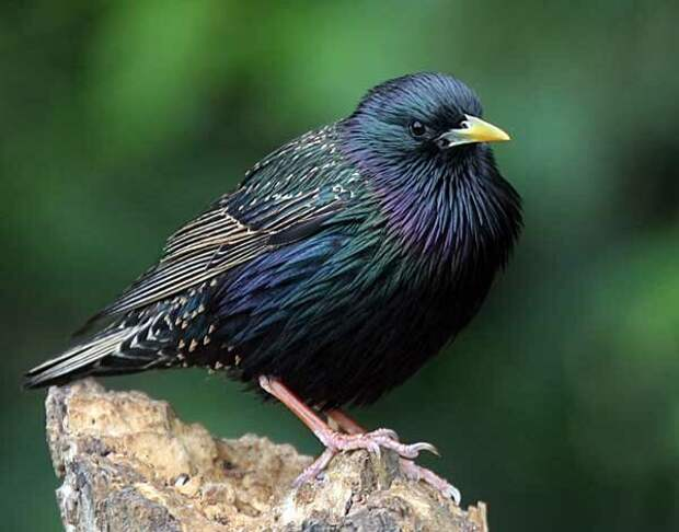 Источник фото: nestwatch.org