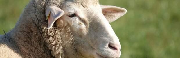 На30,4% снизилось количество краж скота в Алматинской области