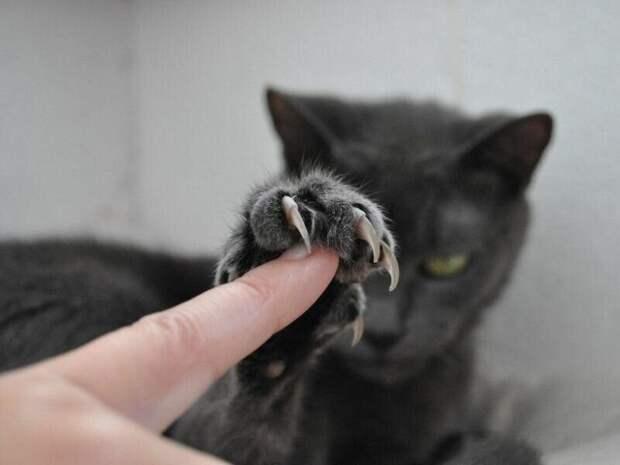 кот кусается