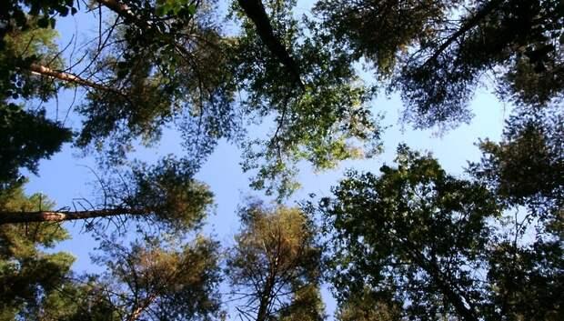 План по лесовосстановлению в Подмосковье в 2019 году перевыполнили
