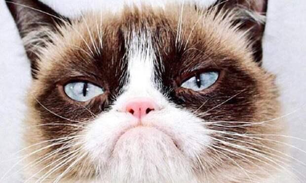Тест «Какой ты кот»: узнай свою породу