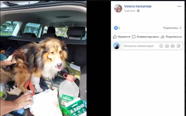 Спасенной в Беговом собаке нашли временный дом