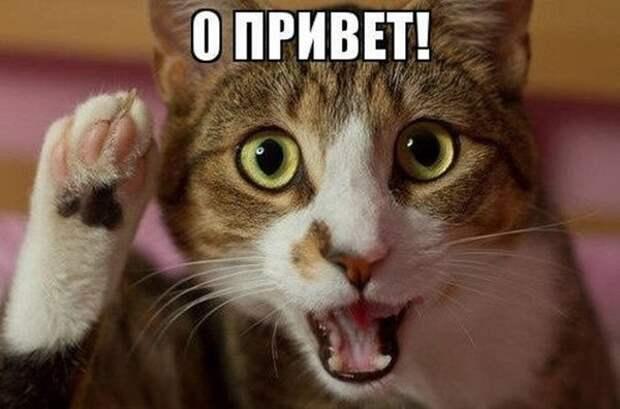 Фото: Смешные приколы про животных: «Позитивный уикенд ...