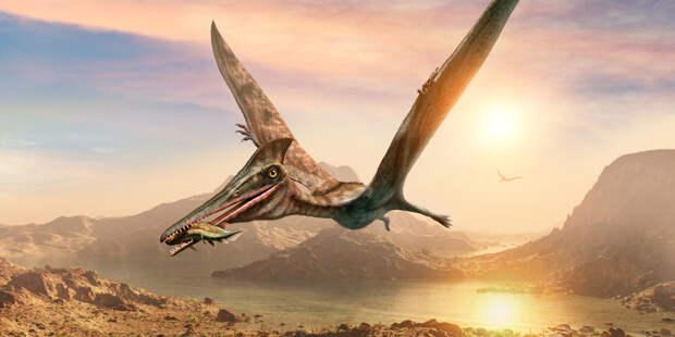 """Длиннее, чем у жирафа: шею птерозавров назвали """"чудом биологии"""""""