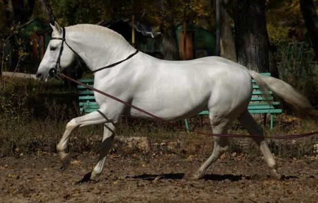 Орловская порода лошадей