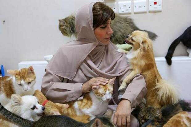 Женщина терпеть не могла животных, а сын подарил ей кота. В итоге теперь с ней живут 500 кошек