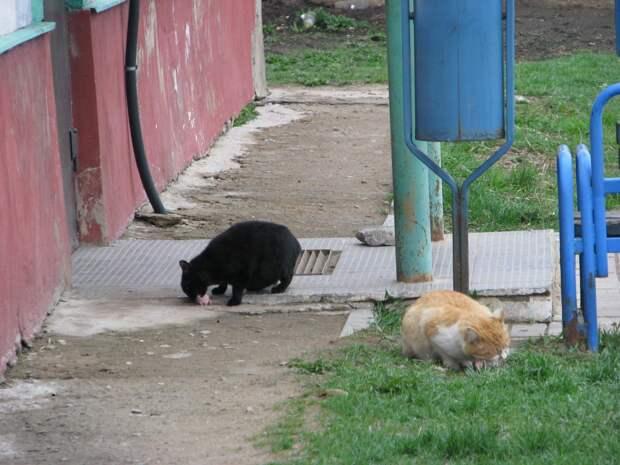 Братья наши меньшие: почему обязательно нужно отдать за неразменный рубль черного кота?