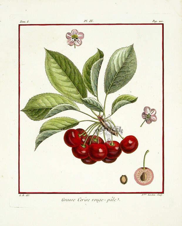 7. Трактат о плодовых деревьях. книги, миллионы, факты