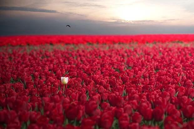 20 снимков невероятной природной красоты природа, фото, красота, в мире