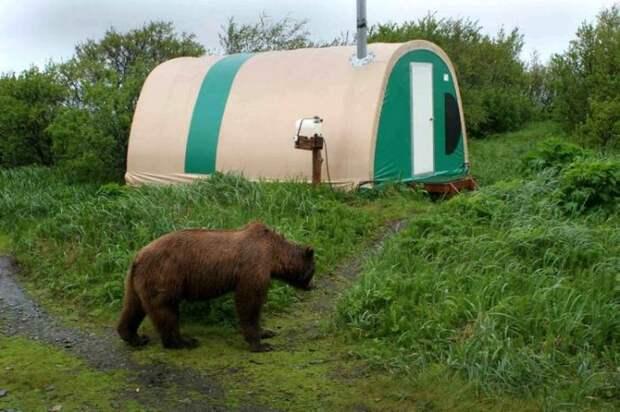 «Медвежий лагерь» на Аляске