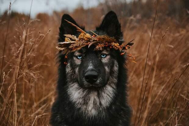1. Недооцените меня. Это будет весело жизненная позиция, жизнеутверждающие, канада, собаки, философия жизни, фото собак, фотограф, хаски