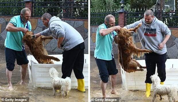 В Cтамбуле во время наводнения спасли выбившегося из сил и едва не утонувшего ретривера