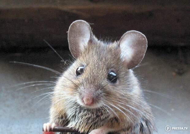 Как мы боролись с мышами