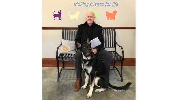 Пес Байдена станет первой приютской собакой в Белом доме
