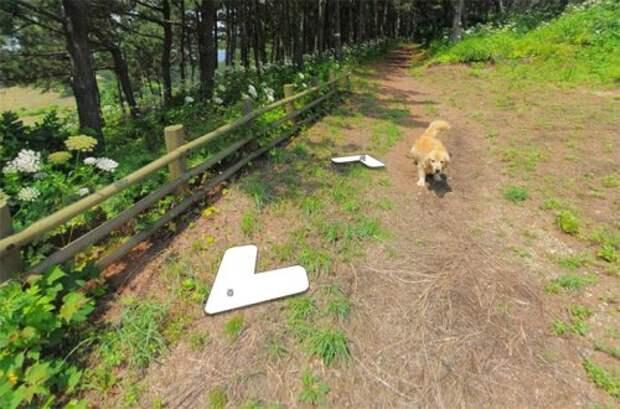 В Южной Корее пёс следовал за фотографом Google Street View, каждый раз попадая в кадр