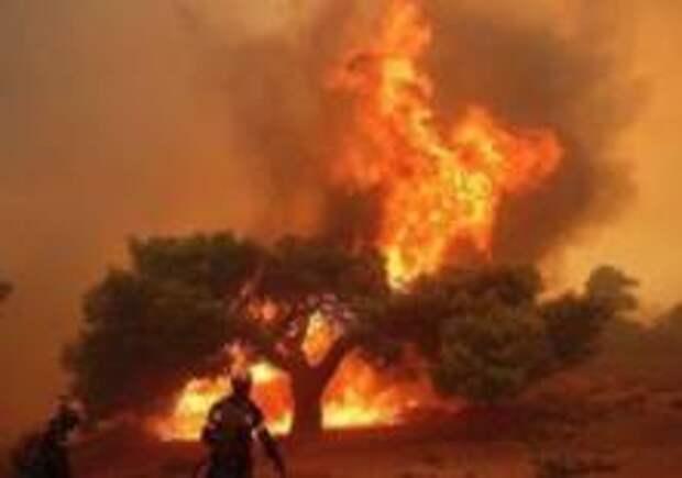 93 человека погибли из-за пожаров в Греции