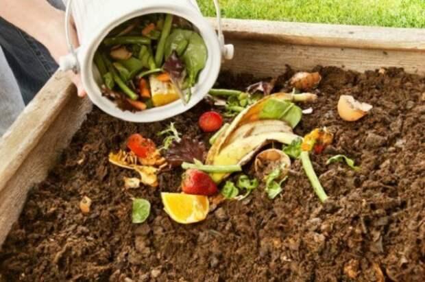 вносим компост осенью