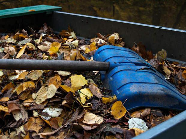 Листовой опад - бесплатное сырье для приготовления органического удобрения