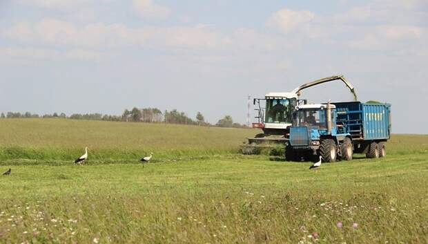 Более 120 га сельхозземель ввели в оборот в Подольске в 2018 году