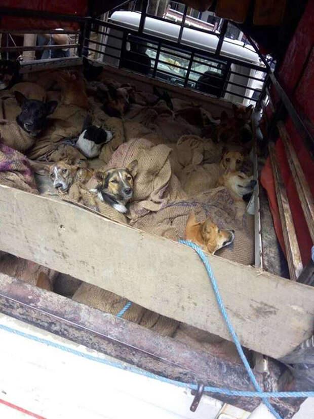 Собак везли в закрытом грузовике.