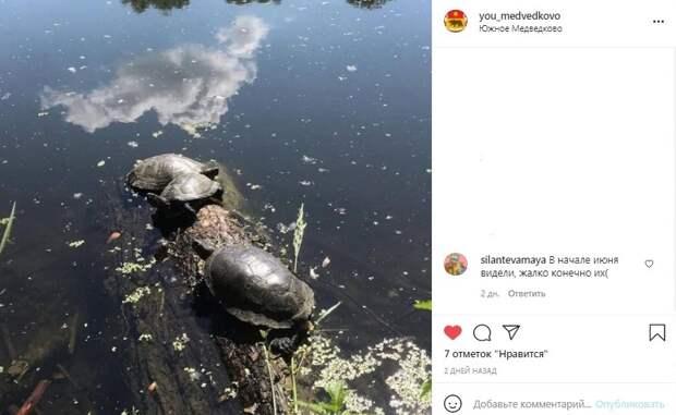 Фото дня: на Яузе нашли брошенных черепах