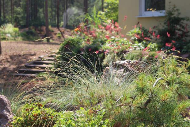 Цветение овсяницы на каменистой горке в нашем саду