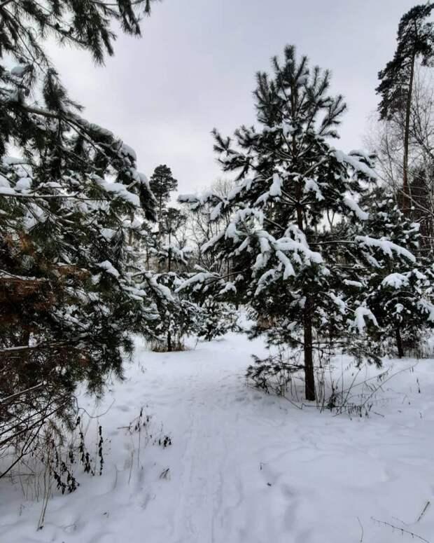 Фото дня: сказочный лес