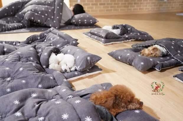 Фото спящих щенков в специальном детском саду стали хитом интернета