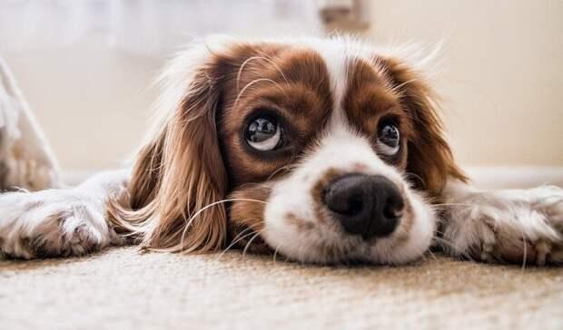 Депутаты предложили регистрировать домашних собак после гибели ребенка вБашкирии